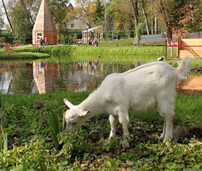 Место: «Городская ферма»