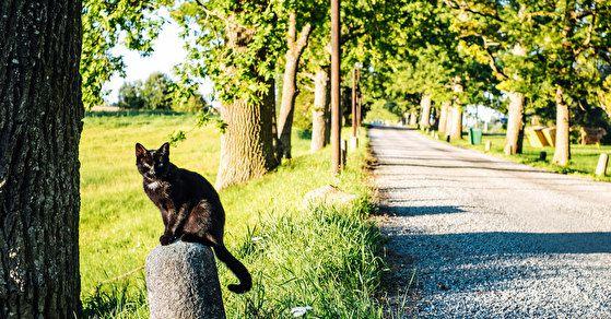10 приятных сюрпризов Южной Эстонии